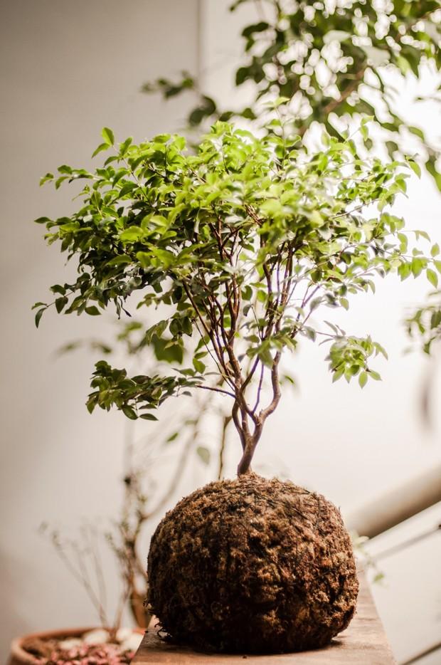 Pinacoteca terá feira botânica  (Foto: Divulgação)