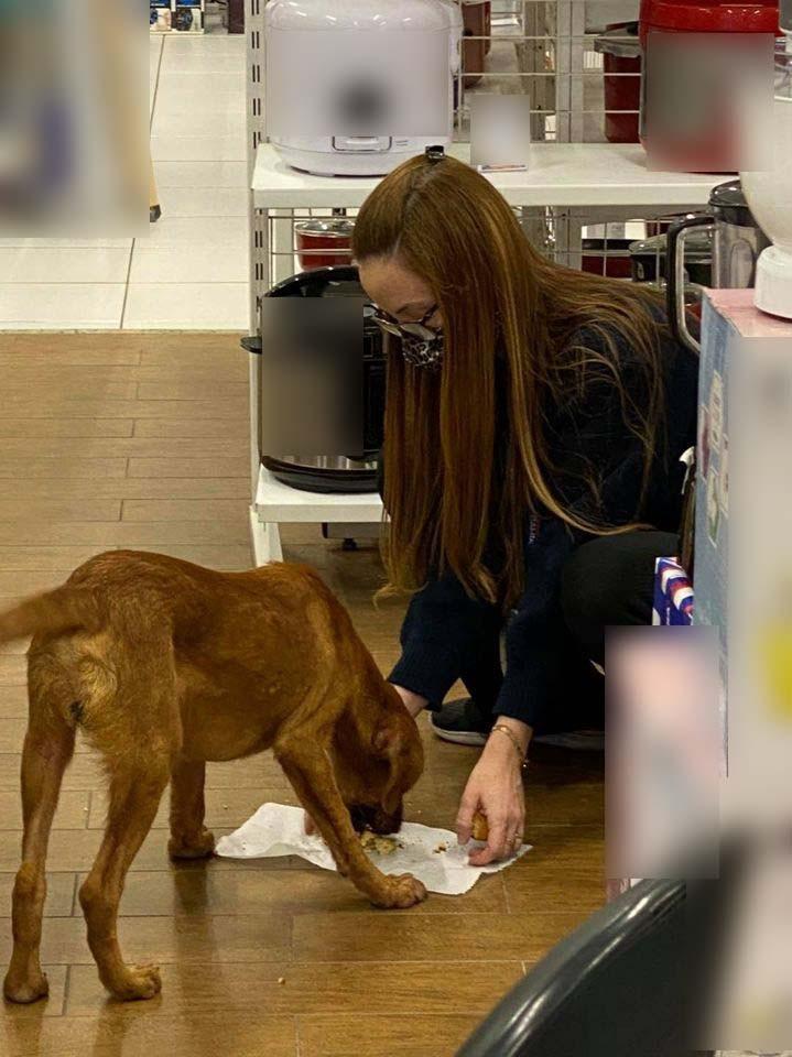 Vendedora viraliza após alimentar cachorro de rua com a própria marmita em Cubatão, SP