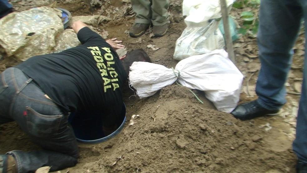 Parte da droga estava enterrada no meio de uma pantação (Foto: PF/Divulgação)