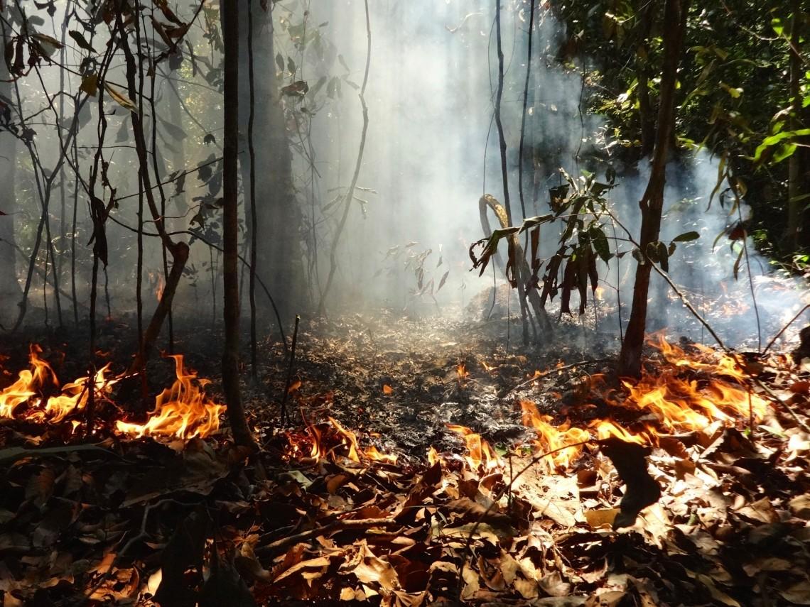 Estudo revela impacto de desmatamento e queimadas na Amazônia desde 2001 (Foto: Paulo Brando)