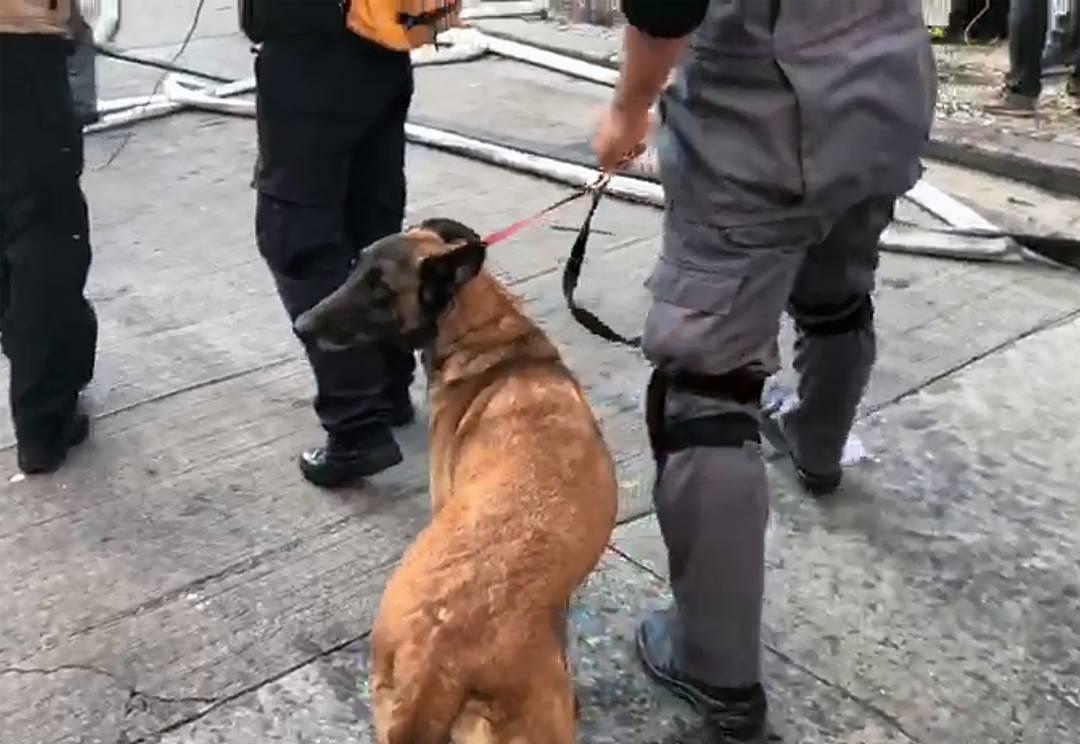Vasty, cão farejador dos Bombeiros, é usado na tentativa de encontrar vítimas