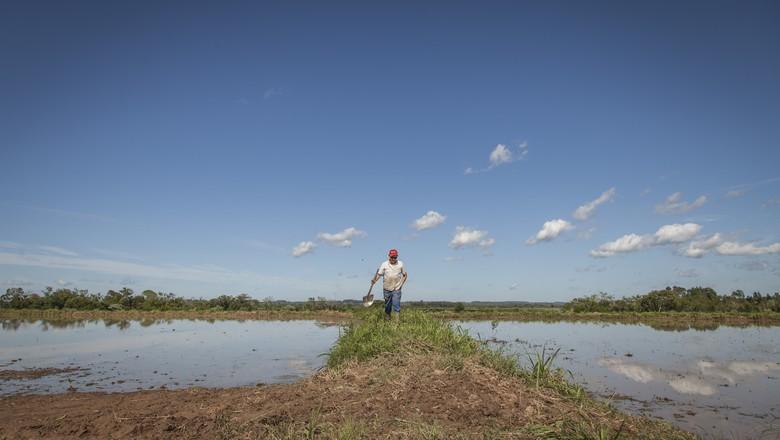 arroz-cereal-rs-arrozeiro (Foto: Marcelo Curia/Ed.Globo)