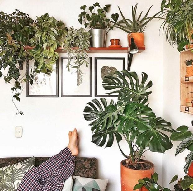 houseplantclub-instagram (Foto: Reprodução/ Instagram)