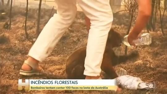 VÍDEO: mulher se arrisca para tirar coala das chamas na Austrália