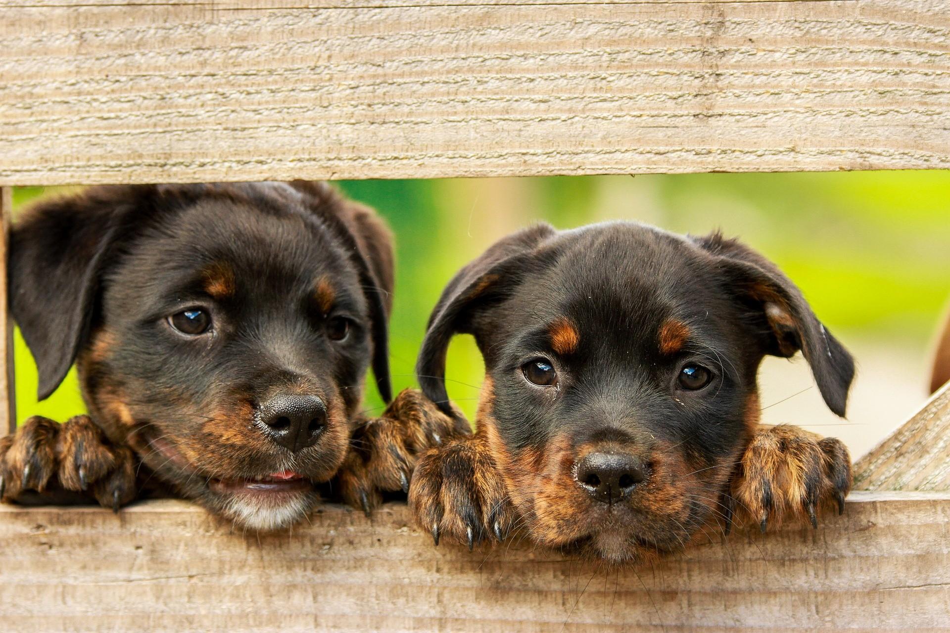 Cachorros (Foto: Divulgação)