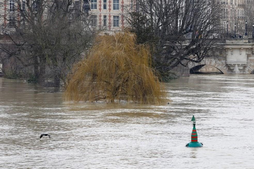 Mais da metade da árvore fica submersa pelas águas do Sena, na margem do rio. (Foto: Geoffroy Van Der Hasselt/AFP)