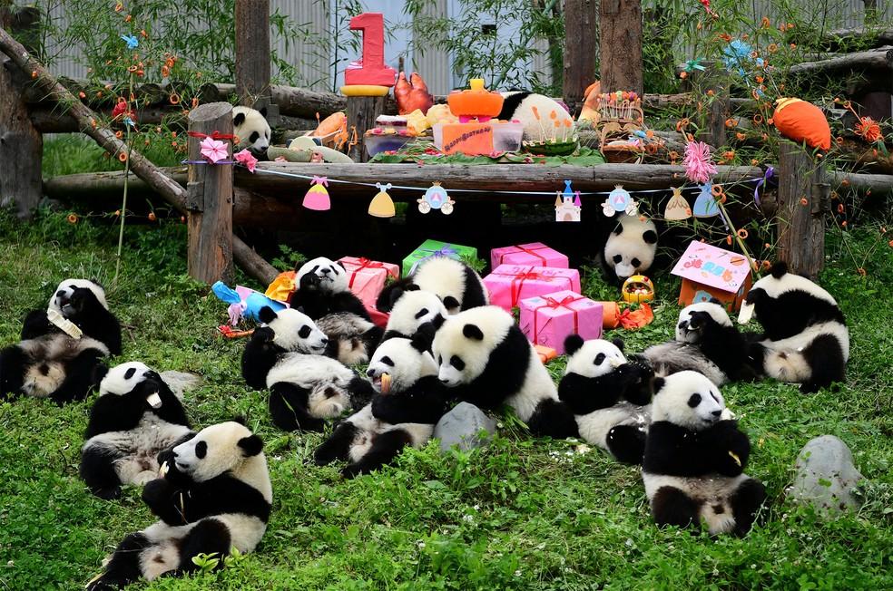 Filhotes de panda-gigante nascidos em 2018 se divertem com decoração e presentes em festa de aniversário coletiva no santuário de pandas Shenshuping, em Wolong, na província de Sichuan, na China. A foto da véspera foi divulgada nesta sexta-feira (26) — Foto: China Daily via Reuters