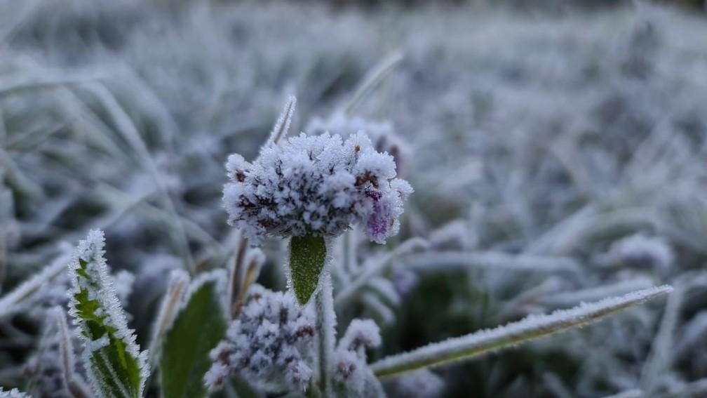 Geada cobriu vegetação nesta manhã de quarta-feira (28) no Vale do Caminho da Neve em São Joaquim — Foto: Mycchel Legnaghi / São Joaquim Online