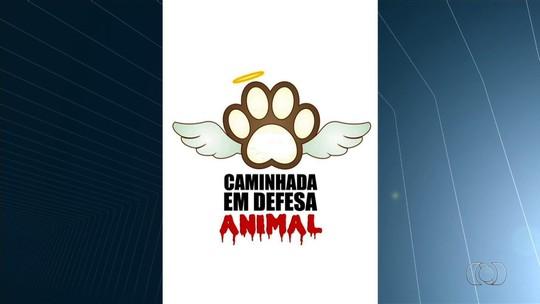 População faz campanha para encontrar responsável por matar mais de 40 cães