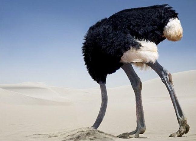 Avestruz, vergonha (Foto: Arquivo Google)