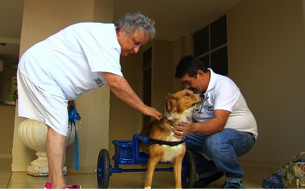 Servidor público constrói cadeiras de rodas de graça para cães que não conseguem andar (Foto: TV Anhanguera/Reprodução)
