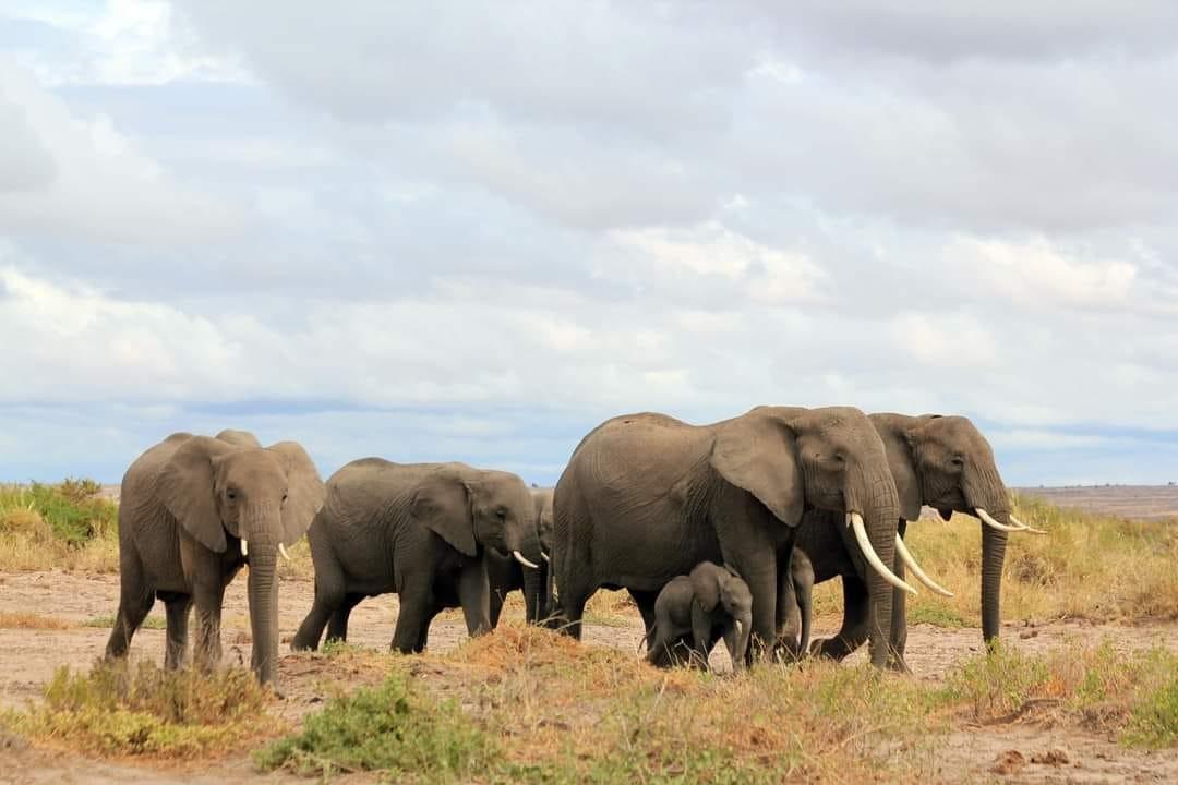 (Foto: Facebook Kenya Wildlife Service)