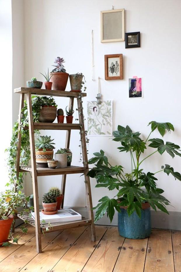 Plantas no cavalete (Foto: Pinterest/Reprodução)