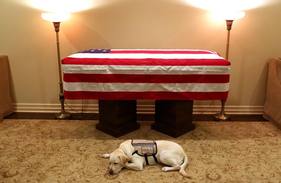 Labrador Sully acompanhou o ex-presidente George W.H. Bush — Foto: Twitter Jim McGrath/ Reprodução