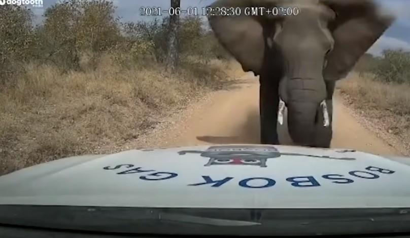 Elefante esmaga capô de picape (Foto: Reprodução/YouTube/The Sun)