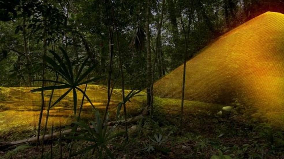Tecnologia mapeia sob a vegetação com laser e cria imagens tridimensionais (Foto: Wild Blue Media/Channel 4/National Geographic )