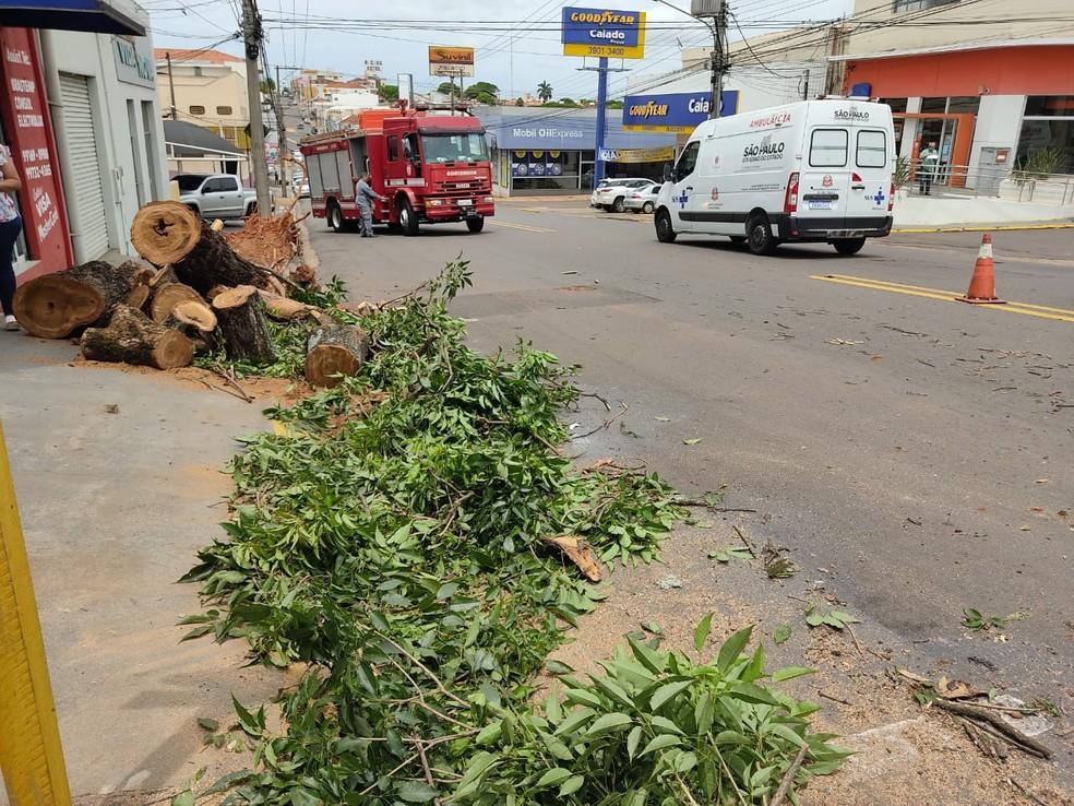 Carreta ficou enroscada em galho de árvore na Avenida Brasil — Foto: Aline Costa/G1