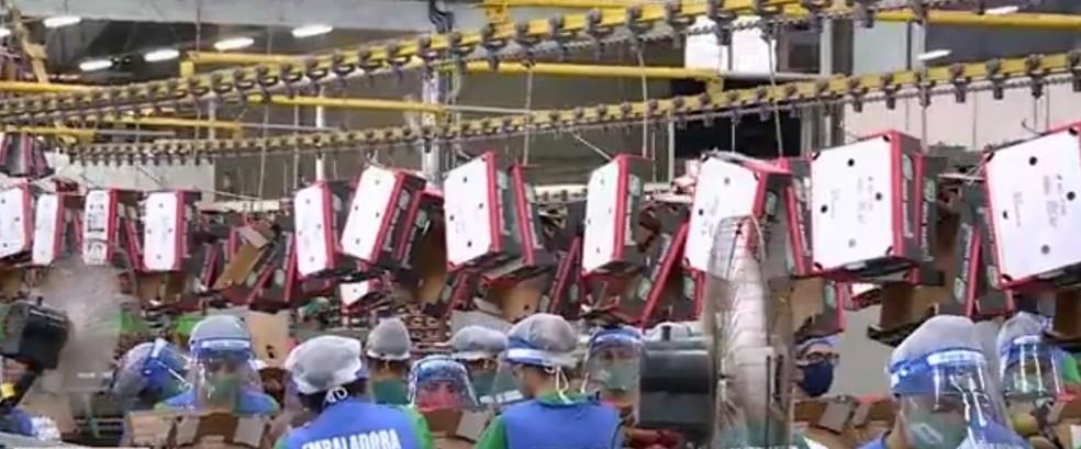 Empresa de exportação de manga em Petrolina — Foto: Reprodução/ TV Grande Rio