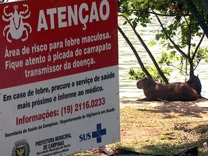 Capivaras encontradas na Lagoa do Taquaral, em Campinas (Foto: Reprodução EPTV)