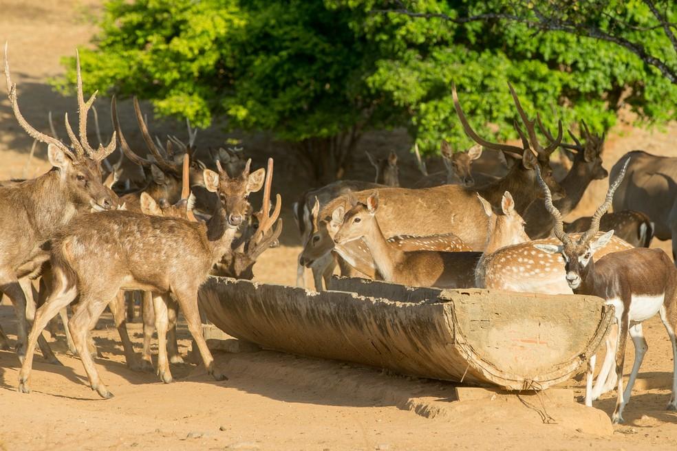 Por terem vindo de climas áridos, animais não tiveram problemas de adaptação no Ceará, mas os cuidados com alimentação recebem atenção redobrada — Foto: Camila Lima/Sistema Verdes Mares