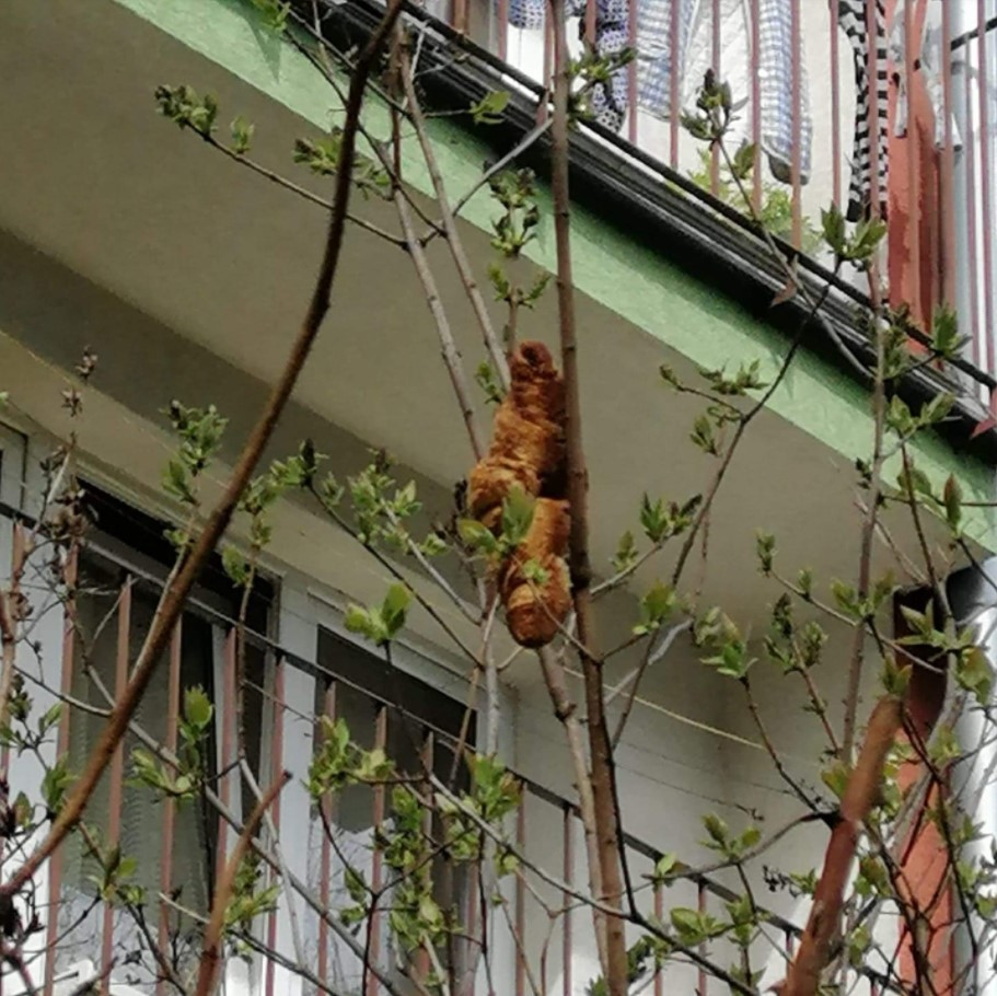 'Criatura misteriosa' em árvore que assustou moradores em cidade da Polônia era croissant