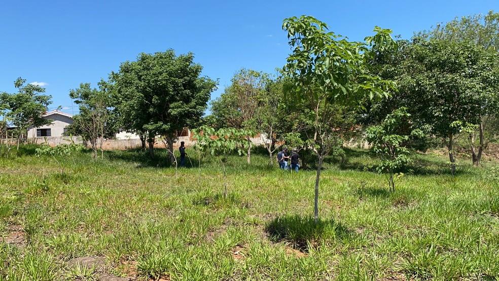 Bebê foi abandonada em área de pastagem em Emilianópolis (SP) — Foto: Bill Paschoalotto/TV Fronteira