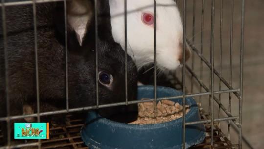 TV Bicho: curiosidades da vida do coelho que é símbolo da Páscoa