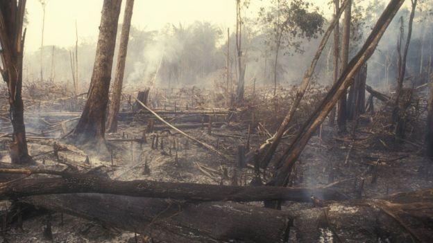 Avanço do desmatamento deve levar Brasil a ter aumento nas emissões  mesmo com paralisação de atividades na pandemia