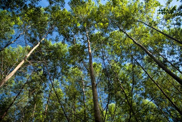 celulose_papel_producao_floresta (Foto: j)