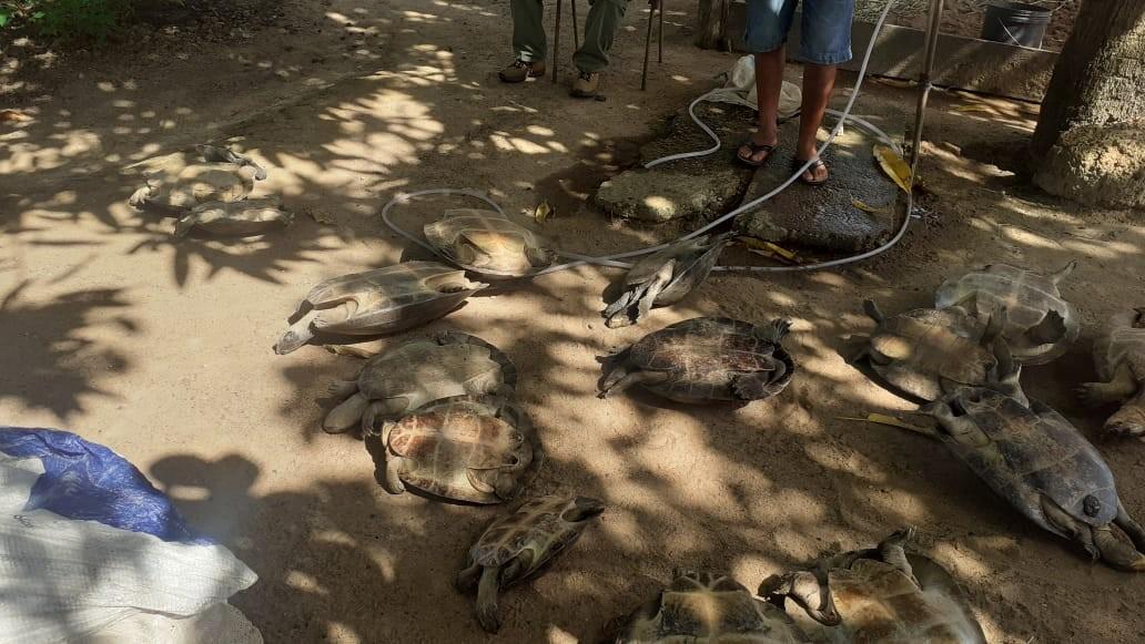 Homens são flagrados com 38 tartarugas e levam multa de R$ 195 mil em RR