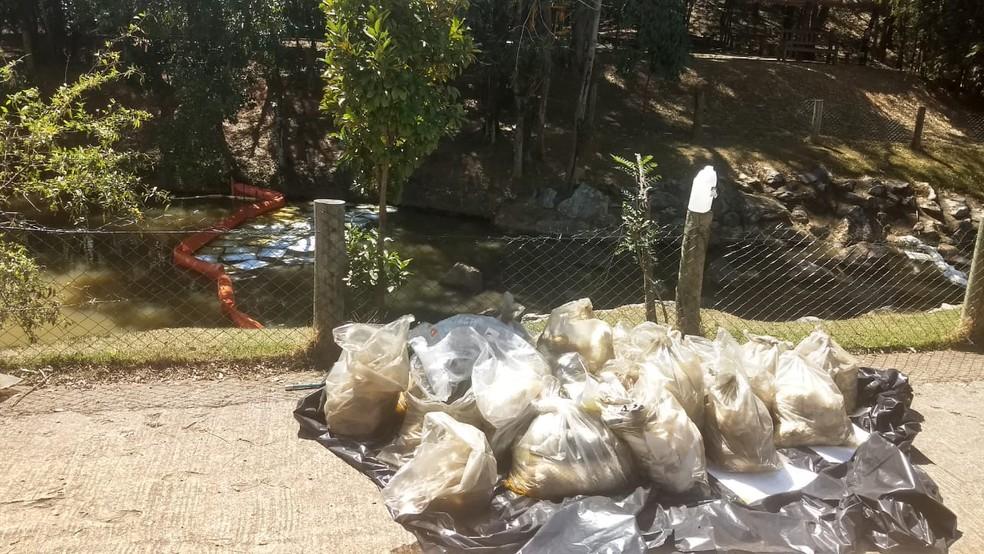 """ÃÂ""""leo vegetal está sendo retirado do lago do parque em Jundiaí — Foto: Lísias Sena/TV TEM"""