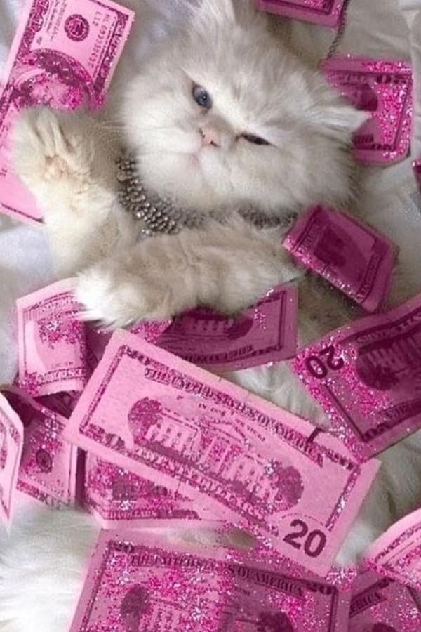 Quem quer dinheiro? (Foto: Instagram/Reprodução)