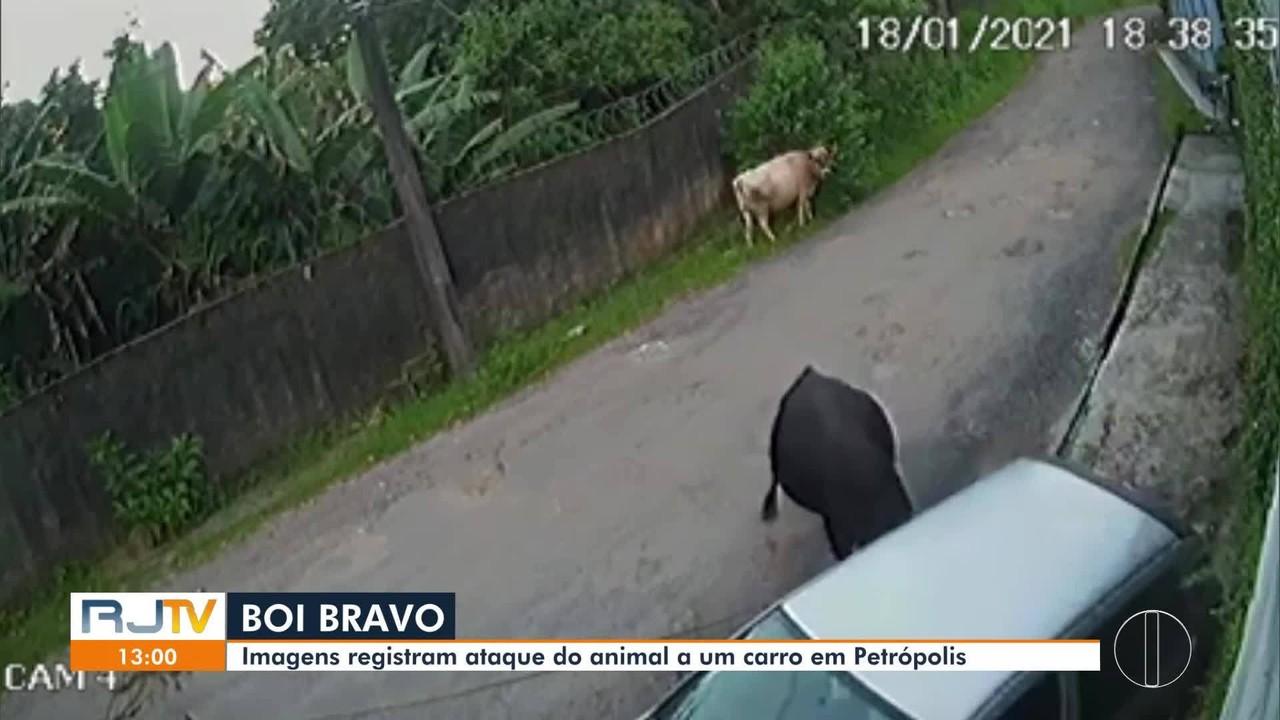 Boi destrói carro estacionado em rua de Petrópolis, no RJ