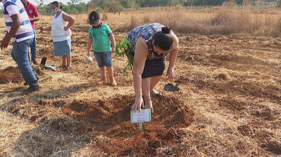 'Plantio da Saudade': escolas de Morro Agudo, SP, simbolizam vítimas da Covid com árvores