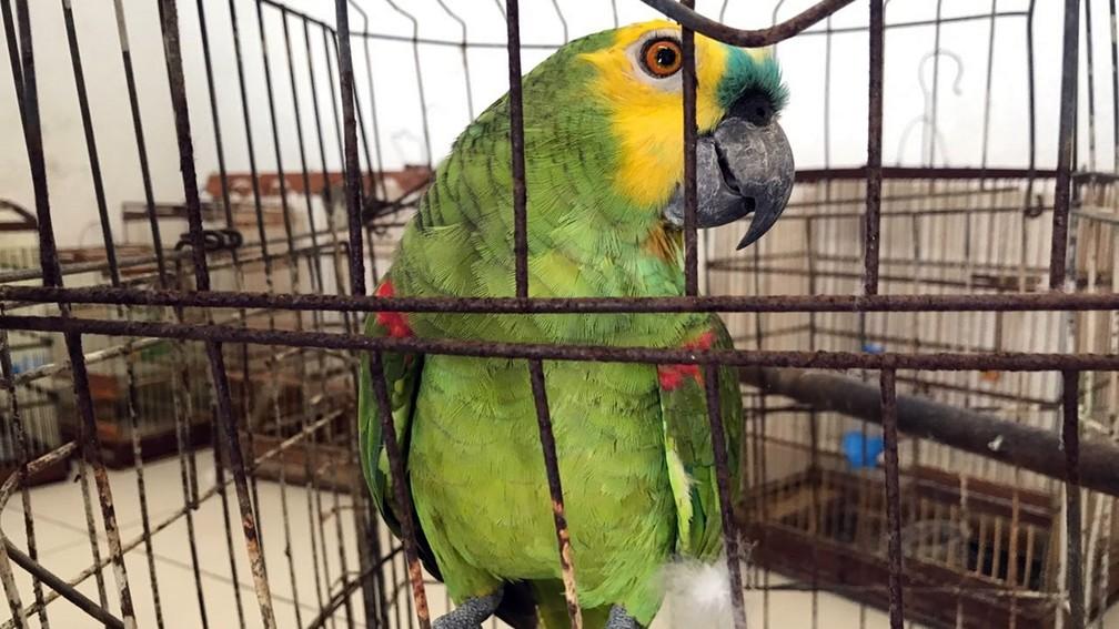 Aves são apreendidas durante operação da PM no bairro do Rangel, em João Pessoa (Foto: Walter Paparazzo/G1)