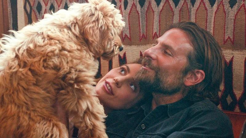 O cachorrinho de Bradley Cooper com o ator e Lady Gaga em cena de Nasce Uma Estrela (2018) (Foto: Reprodução)