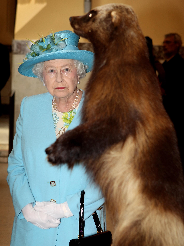 A Rainha Elizabeth 2ª observando um wolverine empalhado em um museu (Foto: Getty Images)