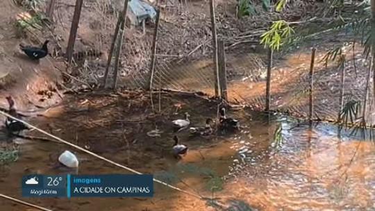 VÍDEOS: EPTV 2 região de Piracicaba desta terça, 17 de setembro