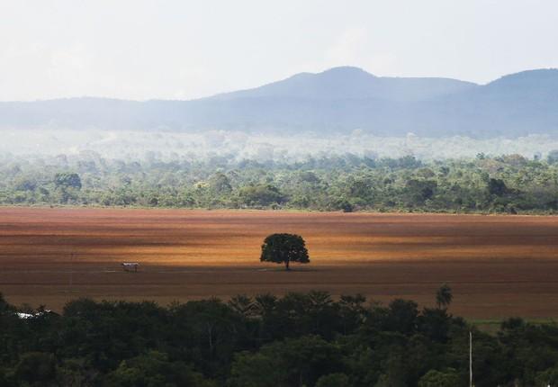 Área de cerrado desmatada para plantio no município de Alto Paraíso - desmatamento (Foto: Marcelo Camargo/Agência Brasil)