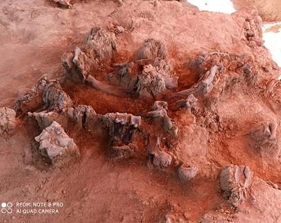 Obras de aeroporto no México desenterram dezenas de ossadas de mamute