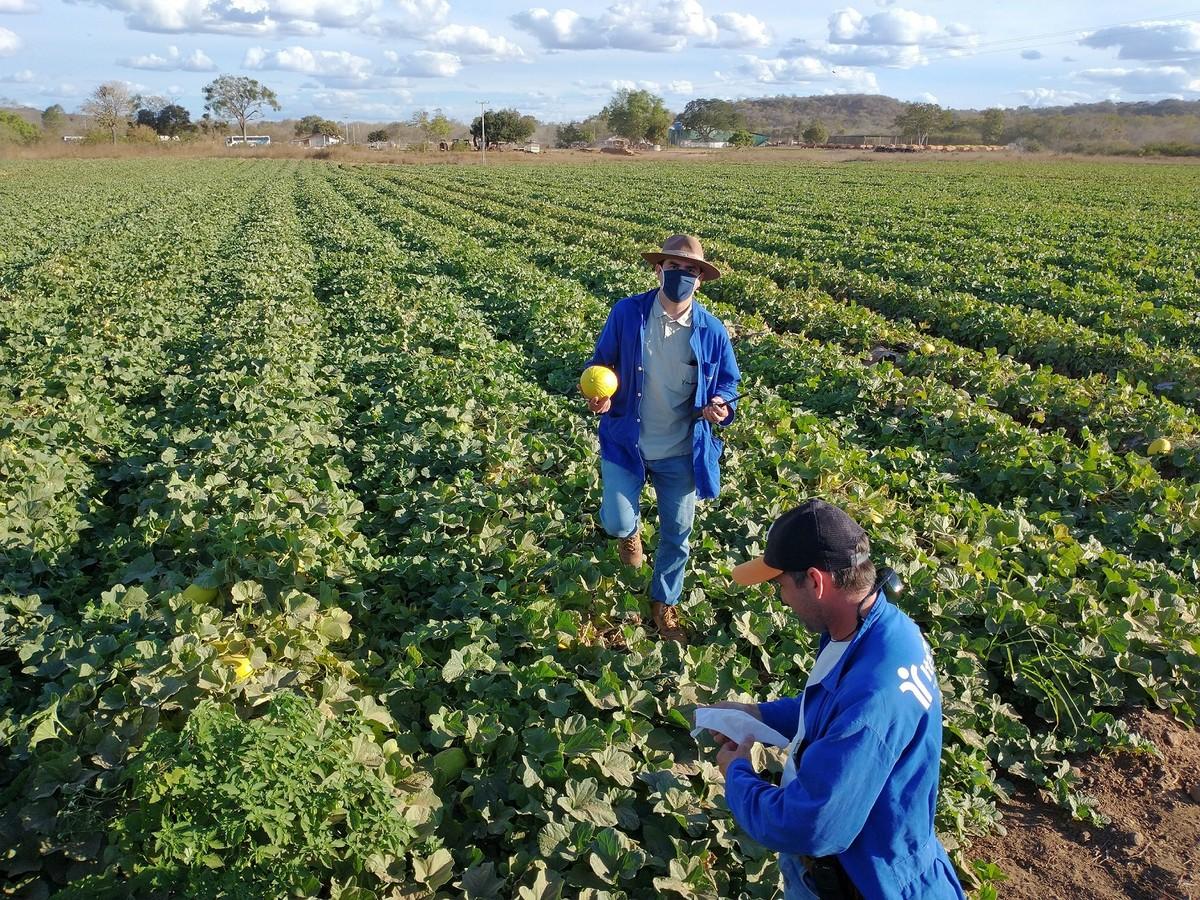 Cresce a procura por profissionais no agronegócio; veja cargos e salários