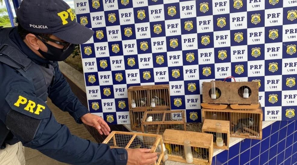 Mais de 20 pássaros que estavam dentro de mochila fechada são resgatados em carro na BR-116 — Foto: Divulgação / PRF