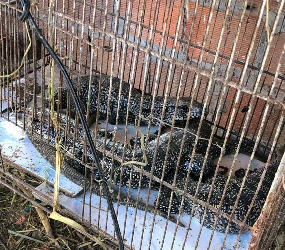 Flagrante ocorreu na quarta-feira (29), no bairro de Paripe.  — Foto: Secretaria de Segurança Pública (SPP-BA)