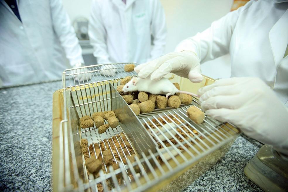 Segundo pesquisadores, substância está sendo testada em camundongos. (Foto: Thiago Gomes / Agência Pará )