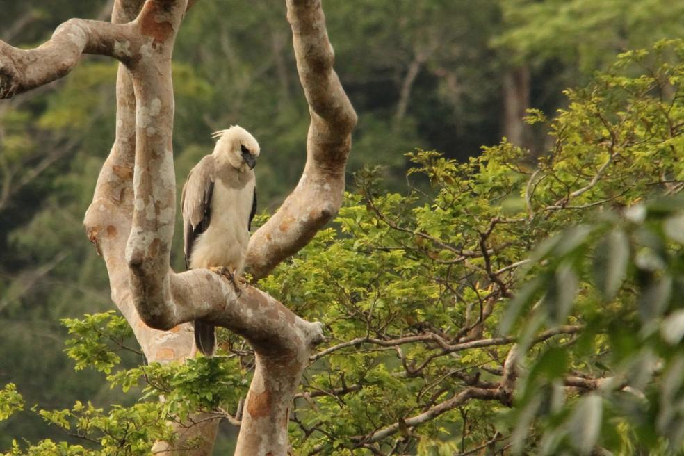 A esperança dos pesquisadores é que encontrem outros indivíduos da espécie — Foto: Raphael Santos/ Arquivo Pessoal