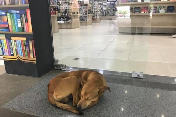 O cão que roubava livros <3 (Foto: Reprodução)