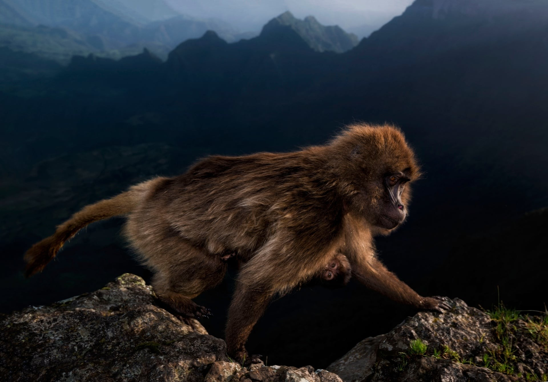 Early Riser (Foto: Riccardo Marchegiani/2019 Wildlife Photographer of the Year)