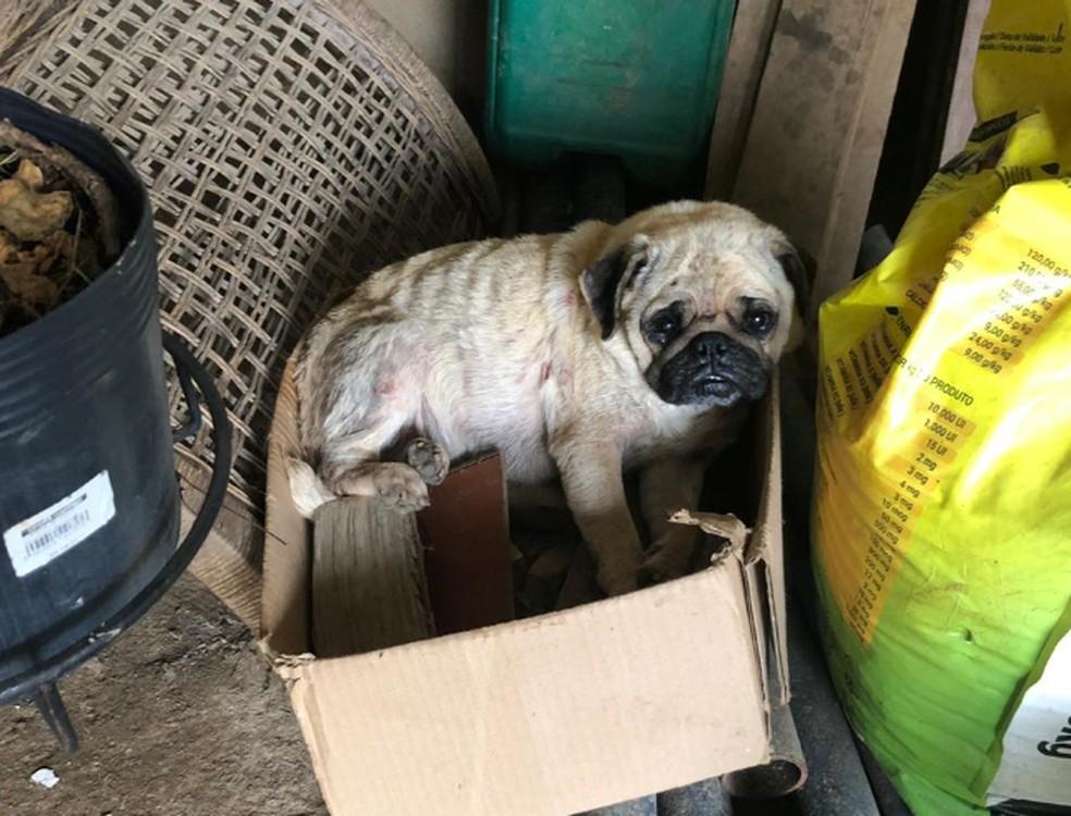 Mais de 40 cães são resgatados de canil clandestino, em Curitiba  — Foto: Polícia Civil do Paraná