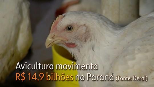 Produção de suínos e de aves alavanca exportações do Paraná e contribui para balança comercial brasileira