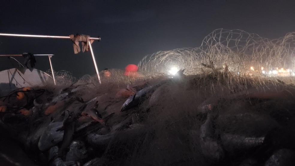Pescadores pegaram cinco toneladas de peixe em Matinhos, na sexta-feira (14) — Foto: Arquivo pessoal/Almir Alves